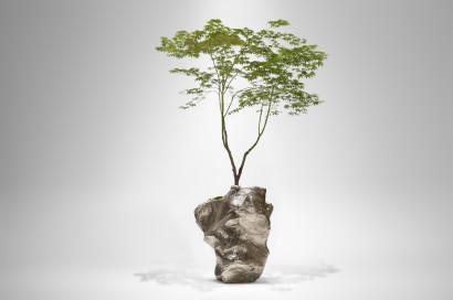Hybrideae II